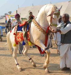 All The Pretty Horses, Beautiful Horses, Animals Beautiful, Horse Gear, Horse Tack, Animals And Pets, Funny Animals, Marwari Horses, Horse Anatomy