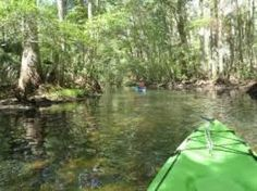 The Many Banes of My Existence by Alexis: What Would YOU do?(9Swimming in the Wekiva river i...