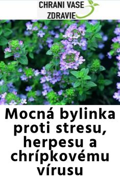 Mocná bylinka proti stresu, herpesu a chrípkovému vírusu Health Fitness, Hair Beauty, Gardening, Medicine, Health, Lawn And Garden, Health And Fitness, Cute Hair