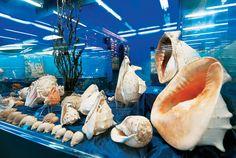 Μουσείο Ναυτίλος - http://www.ilia-mare.gr/mouseio-naftilosΗ Εύβοια έχει πολλά πανέμορφα μέρη και ενδιαφέροντα αξιοθέατα όπου οι επισκέπτες της αξίζει να επισκεφθούν. Ένα από αυτά είναι το Μουσείο Ναυτίλος που βρίσκεται στην Αιδηψό. Το μουσείο λειτουργεί καθημερινά όλο το χρόνο κ