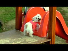 his is a video of a cute little dog that likes going down the big slide like a super hero.