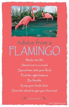 Change Advice from a Flamingo: Be Flexible! Your True Nature Quotes To Live By, Life Quotes, Advice Quotes, Advice Cards, True Nature, Nature Quotes, Spirit Guides, Happy Thoughts, Good Advice