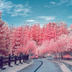 what spring looks like in infrared