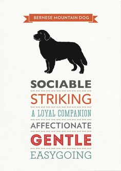 Bernese Mountain Dog Breed Traits Print by WellBredDesign on Etsy