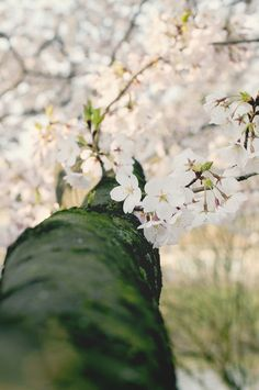 Spring Blooms by Ana Just Photography   Done Brilliantly