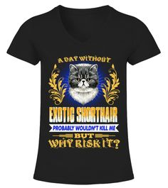A Day Without Exotic Shorthair Lover