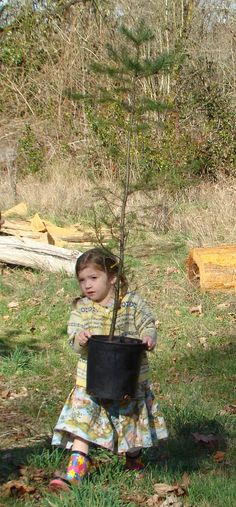 Tree planting tips for your class, community group, or family to use when planting trees this spring.