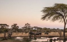 The Matetsi River Lodge and the Matetsi River House are located within the Matetsi Private Game Reserve at the Victoria Falls of Zimbabwe, Southern Africa. River Lodge, Private Games, Victoria Falls, Game Reserve, Zimbabwe, Lodges, Africa, Afro, Victoria