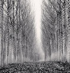 Corridor of Leaves, Guastalla, Emilia Romagna, Italy  by Michael Kenna