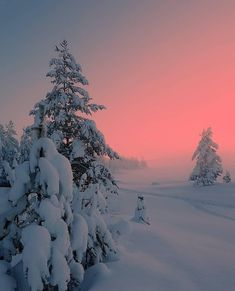 Find images and videos about nature, travel and winter on We Heart It - the app to get lost in what you love. Winter Photography, Nature Photography, Beautiful World, Beautiful Places, Into The Wild, Whatsapp Wallpaper, Winter Scenery, Winter Trees, Winter Sunset