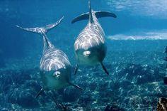 Científicos piden una Constitución para delfines y ballenas