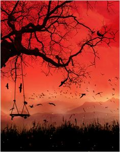 Silhouette of a Tree & Tree Swing with a Red Sky