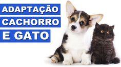 Como fazer gato e cachorro se darem bem? Existe como? Conversamos sobre isso junto com o Ed do Manual do Homem Moderno que está passando por essa situação!  Manual do Homem Moderno: https://www.youtube.com/user/ManualHomemModerno   Nosso site: http://www.vlogquatropatas.com.br  Quatro Patas nas redes sociais: Facebook: http://www.facebook.com/vlogquatropatas Instagram: http://instagram.com/vlogquatropatas Twitter: https://twitter.com/vlogquatropatas