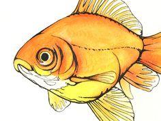 """Mumford"" the goldfish - by Dylan Byrd"