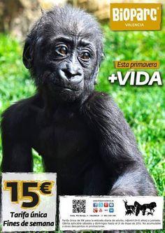 DESCUENTOS EN EL BIOPARC (VALENCIA). Sólo este fin de semana disfruta de Bioparc Valencia por 15€. ¡¡Aprovecha esta oportunidad!!  + INFO: http://shop.turisvalencia.es/es/entradas-turisticas/bioparc