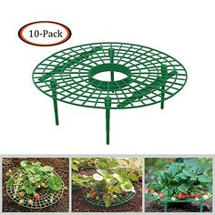Cinhent Strawberry Supports, Strawberry Plant Growing Supports, Strawberry Supports Keeping Fruit Elevated to Avoid Ground Rot in The Rainy Days Strawberry Seed, Strawberry Planters, Strawberry Garden, Fruit Holder, Plant Holders, Lawn And Garden, Garden Tools, Garden Ideas, Tomato Planter