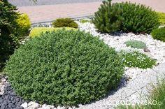 Ogród Anety - Forum ogrodnicze - Ogrodowisko