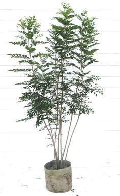 エクステリア設計士100人に聞いた、よく使う庭木・樹木人気ランキングTOP10! | エクステリアと住まいの。Nexell ネクセル