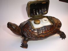 Vintage Antique Taxidermy Tortoise Double Inkwell RARE Find Real Turtle