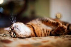 Image from http://www.animal-images.com/data/photos/73_1cat_resting_kentucky_pet_portrait.jpg.