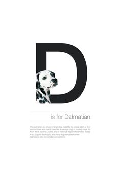 The Dog Alphabet – Fubiz Media