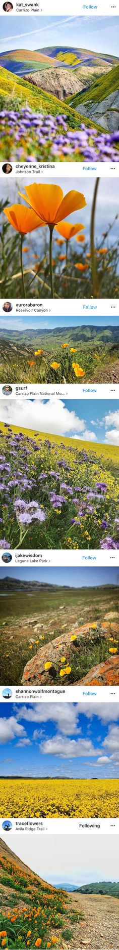 Discover the top spots to see wildflowers and California poppies around San Luis Obispo today, including the Carrizo Plain National Monument, Shell Creek Road and more!