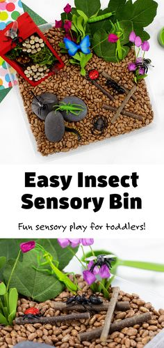 Preschoolers and toddlers will enjoy playfully learning all about insects and bugs with this easy and fun insect sensory bin! #preschool #toddlers #ideas #insectsensorybin #preschoolbugideas #sensorybin via @firefliesandmudpies Sensory Tools, Sensory Bins, Sensory Play, Lego Design, Indoor Play, All Kids, Play Ideas, Playroom, Bugs