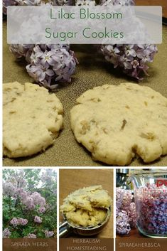 Delicate and fragrant, lilacs are an unmistakable smell of spring. Paired with vanilla & coconut, this lilac blossom sugar cookie is a lovely spring treat. Real Food Recipes, Cookie Recipes, Weed Recipes, Paleo Recipes, Easy Recipes, Recipies, Lilac Blossom, Flower Food, Cactus Flower