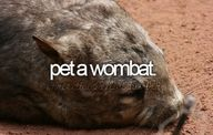 OKAY IF YOU SAY SO. *wanders off to die happy under a pile of snuggly wombats*
