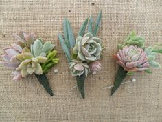 neat boutineers using succulents instead of flowers. something like this for the groom/groomsmen/FOB/FOG. maybe having twine/hemp/jute to wrap