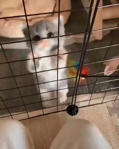 Cute Baby Cats, Kittens And Puppies, Cute Cat Gif, Cute Cats And Kittens, Kittens Cutest, Super Cute Animals, Cute Little Animals, Cute Funny Animals, Funny Cats