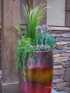 #Succulents, Mexican feather grass and euphorbia 'Ascot Rainbow' together in #pool side containers. #droughttolerant