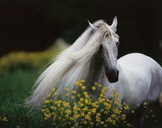 #beautiful #pretty #horse