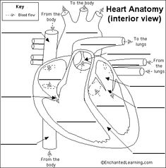 Free parts of the heart worksheets human hearts with labels to enchanted learning free heart anatomy diagram ccuart Images