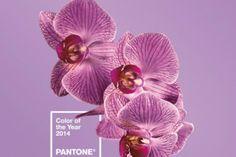 Il colore della prossima estate: Radiant Orchid