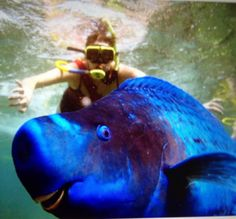Diver photo bombed by parrot fish! Awesome.