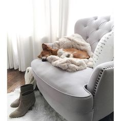 someone is putting our Ruched Faux Fur Throw to good use! #mypotterybarn #pbpet