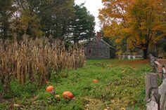 A Pumpkin Field at Old Sturbridge Village