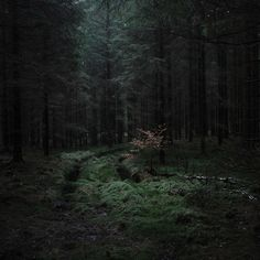 Ideas photography dark light paths for 2019 Dark Green Aesthetic, Slytherin Aesthetic, 3d Fantasy, Deep Forest, Magical Forest, Mother Nature, Paths, Nature Photography, Photography Tips