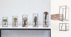 Terrarium as Vase, by Way of Japan by                                                Erin Boyle