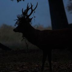 Deer Rut Dawn #deer #rut #deerrut #antlers #bracken #display #courtship #mating #male #mammal #wildlife #nature #behaviour #richmondpark #dawn #london #london