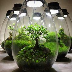 Bonsai tree as terrarium Succulent Gardening, Succulents Garden, Garden Plants, House Plants, Terrarium Diy, Terrarium Containers, Bottle Terrarium, Bottle Garden, Glass Garden