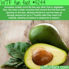 WTF Fun Facts is updated daily with interesting & funny random facts. We post about health, celebs/people, places, animals, history information and much more. New facts all day - every day! Wow Facts, Wtf Fun Facts, True Facts, Funny Facts, Random Facts, Strange Facts, Crazy Facts, The More You Know, Good To Know