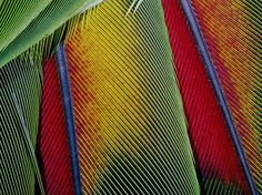 Bird Feathers  Photograph by George Grall    Bird feathers create a colorful show.