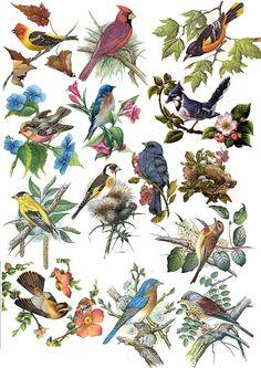Small Birds, Pet Birds, Color Pencil Sketch, Funky Painted Furniture, Bird Pictures, Vintage Birds, Wild Birds, Bird Art, Art Studios
