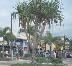 Airlie Beach, Australia — by The Whites Blog. The main street in Airlie Beach
