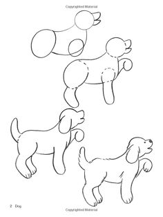 How to Draw Pets (Dover How to Draw): Barbara Soloff Levy: 9780486447100: Amazon.com: Books