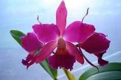 Como cultivar plantas e flores tropicais no seu jardim - Gestão no Campo