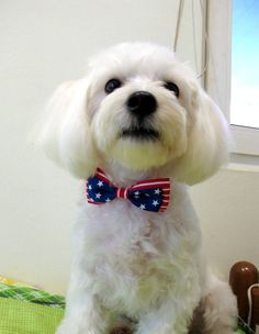 Dog Bow Tie Collar Patriotic Double Bow by furkidscloset on Etsy, $23.00