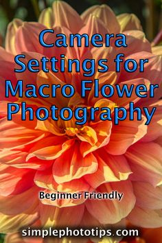 In this post by Simple Photo Tips, I am going to provide suggested camera settings for macro flower photography. Also affordable gear to help out with the process. Click to read about this amazing technique. #phototips #cameratips #photographyinfo #photographytutorial #simplephototips #photography101 #howtousecamera #photographyforbeginners #DLSRcamera #camerasettings #MacroPhotography